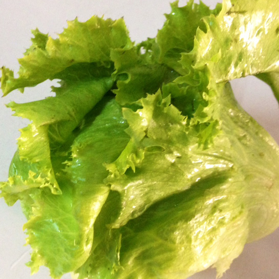 lettuce-green batavia
