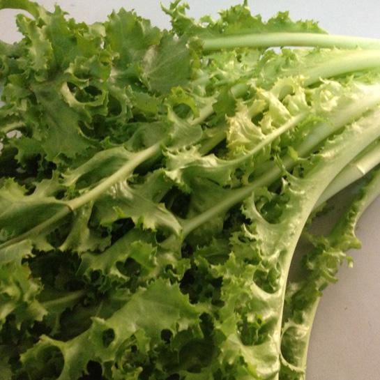 lettuce-green-butterhead