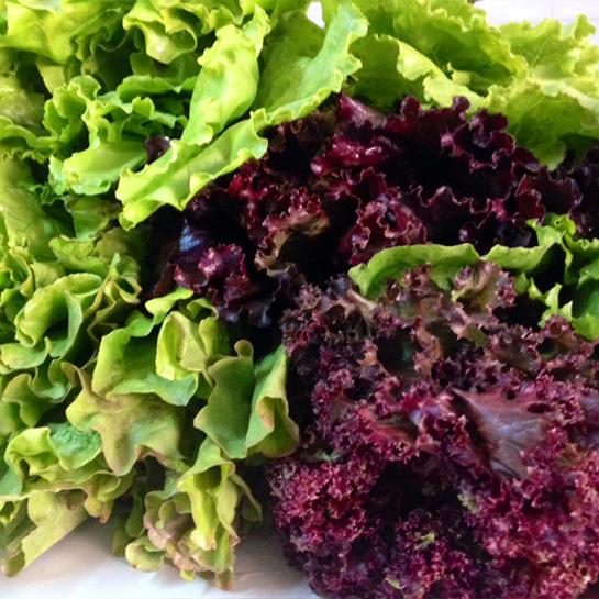 lettuce-mixed