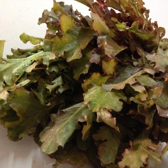 lettuce-red-oak